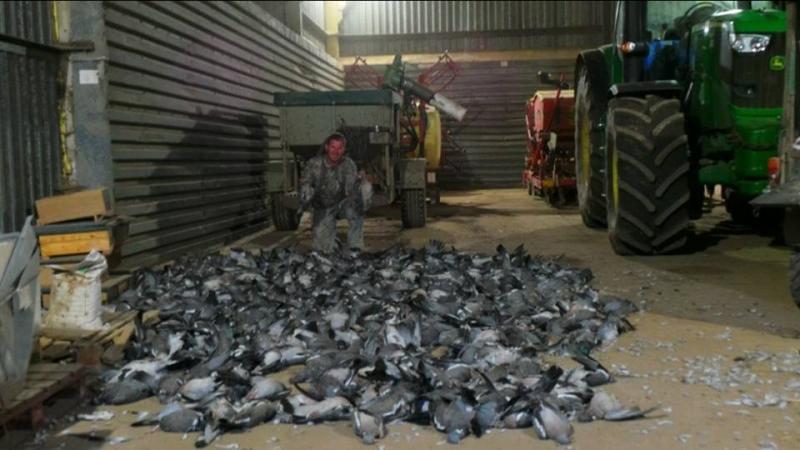 Филип Торрольд и 602 голубя